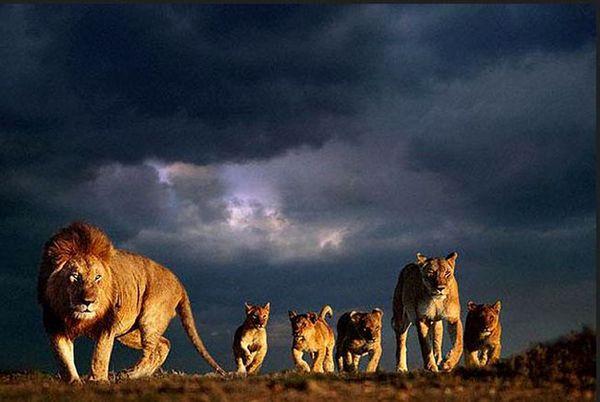 Красивые животные красивые животные